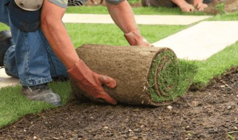 New SOD for Lawn Spartan